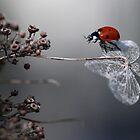 Ladybird on old hydrangea  by Ellen van Deelen
