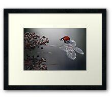 Ladybird on old hydrangea  Framed Print