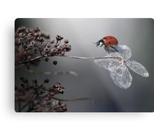 Ladybird on old hydrangea  Metal Print
