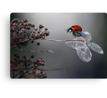 Ladybird on old hydrangea  Canvas Print