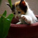 I keeelll you, leaf creature!  by meowiyer