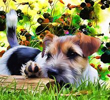 Yorkshire Terrier by sale