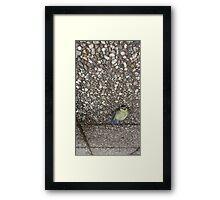 A dead bird looking still alive. Framed Print