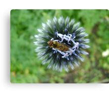 Whizz! Hoverfly on blossom. Canvas Print