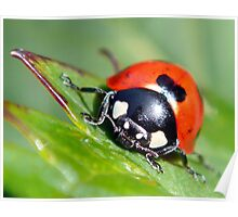 Lady Bug Poster
