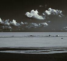 A Lonely Dog Run Back by Nikolay Semyonov