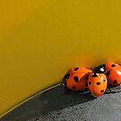 Ladybird Huddle by CarolM