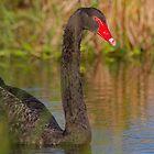 Sunset Swan by byronbackyard