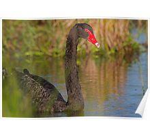 Sunset Swan Poster