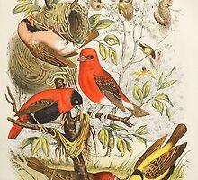 Weaver Birds by Peter Stone