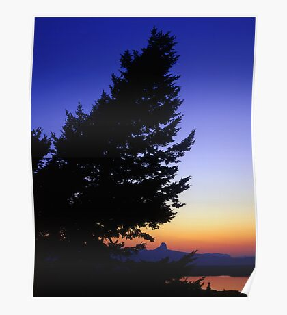 Conifer Tree at Duck Lake  Poster
