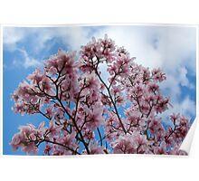 Magnolia Skies Poster