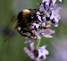 Honey by Ian Sanders