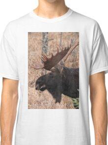 Bull moose - Algonquin Park, Ontario Classic T-Shirt