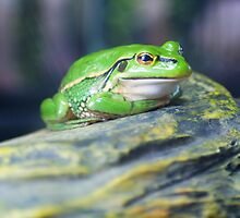 "Green ""n""Gold Frog by Thow's Photography"