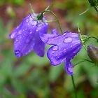 Raindrops are fallin on the flowers by ThePhotoMaestro