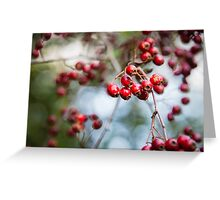 Bright red berries on a hawthorn hedge Greeting Card