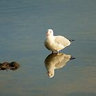 Seagull Reflection by Chris Kiely