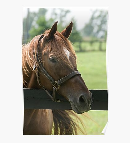 Creator - Old Friends Equine, Kentucky Poster