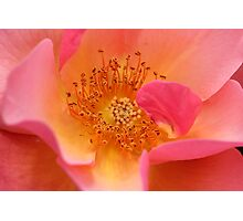 Flower Stamen Photographic Print