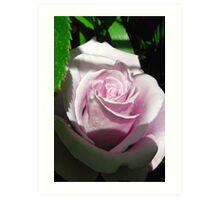 Sterling rose Art Print