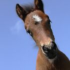 Dartmoor Pony Foal by Anthony Collins