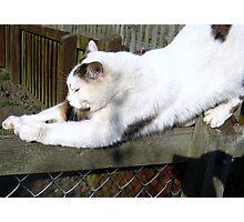 Bendy Cat Photographic Print