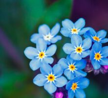 Forget Me Not Flowers Sticker