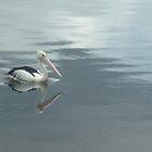 Pelican by Redviolin