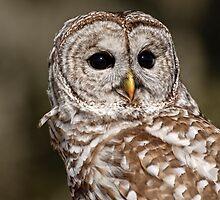 Barred Owl - Brighton, ON by Tracey  Dryka