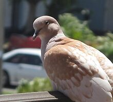 Bird infront of my house by wendolin123