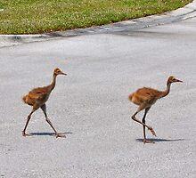 Cranes Crossing by Douglas Alan Photography