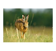Brown Hare Running Photographic Print