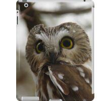 Northern Saw - Whet Owl - Amherst Island, Ontario iPad Case/Skin
