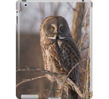Great Grey Owl, Ottawa, Ontario iPad Case/Skin