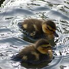 Twins chicks for Easter by loiteke
