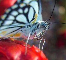 Flower Bud Investigator by Peter Chaffey