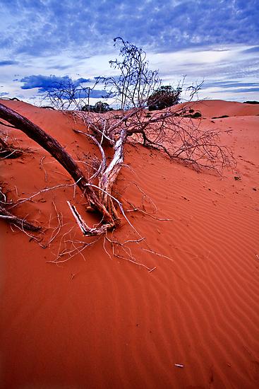 desert struggle by doug hunwick