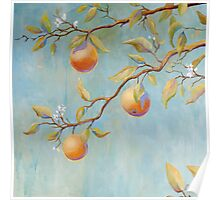 Orange Blossoms Poster
