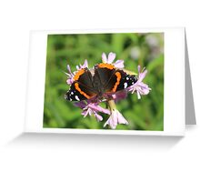 good red admiral Greeting Card