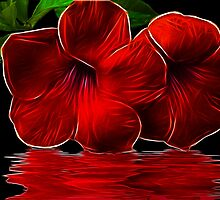 Magestic Red by Brandie1