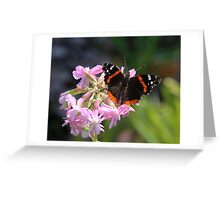 good red admiral two Greeting Card