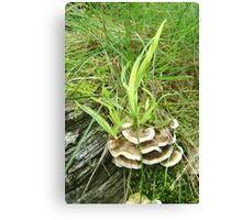 Fungus foliage flame Canvas Print