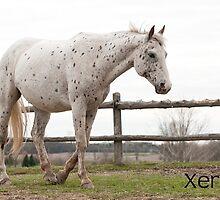 Xerox - NNEP Ottawa, Ontario by Tracey  Dryka