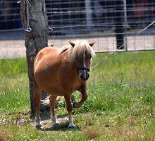 Prancing Pony by Brandie1