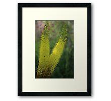 Summer in the Garden Framed Print