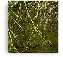 Wild Nature Collage Print Canvas Print
