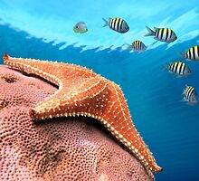 Starfish underwater on coral with sergeant major fish by Dam - www.seaphotoart.com