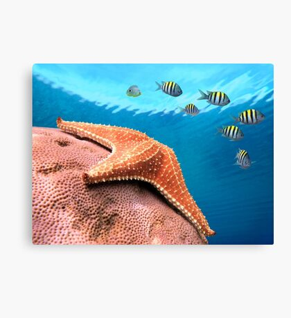 Starfish underwater on coral with sergeant major fish Canvas Print