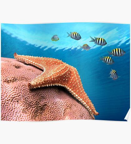 Starfish underwater on coral with sergeant major fish Poster